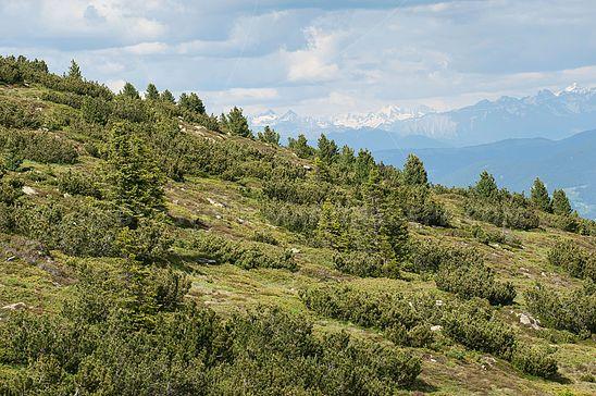 Hochalpine Vegetationszone