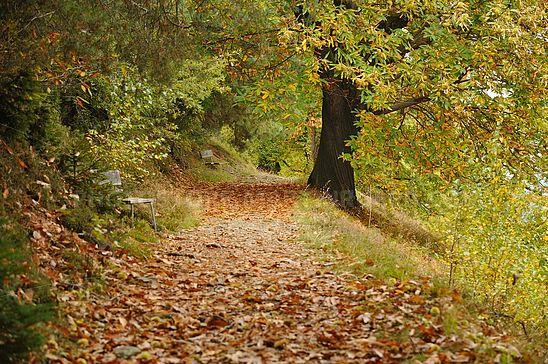 Keschtnweg im Herbst