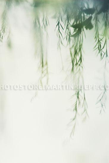 Grüne Spiegelung II