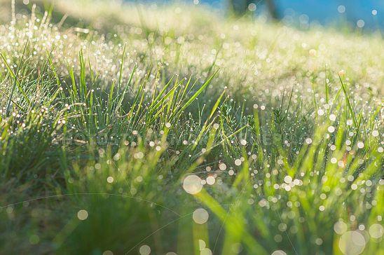 Frühlings-Morgentau