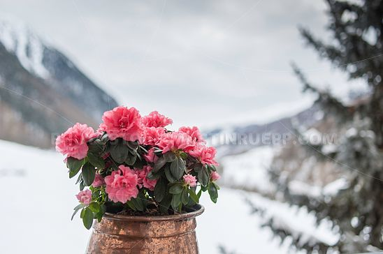 Blumen vor Winterlandschaft