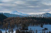 Winterwald bei Völser Aicha