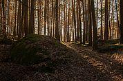 Wald und Steine