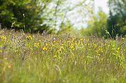 Mai-Blumenwiese
