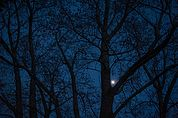 Mondlichtpappeln