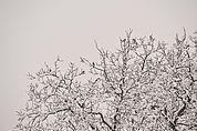 Der Baum und die Vögel