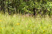 Wald-Wiese