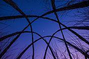 Mond im Weidenhaus