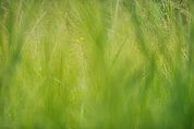 Graslandschaft