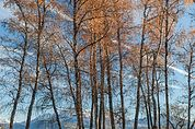 Baum-Landschaften
