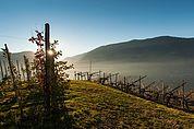 Wein- und Apfelberg