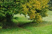 Der Weg durchs Haselgebüsch