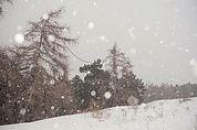 Bäume im Schneefall