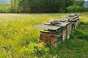 Bienenkisten in einer Wiese