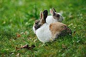 Zwei Kaninchen in der Wiese