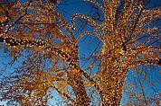 Weihnachts-Lichtbaum