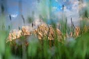 Die Geisler im Gras