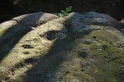 Schalenstein bei St. Verena