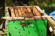 Offene Bienenkiste