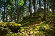 Das Großegg in Pfalzen