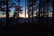 Sonnenuntergang unter Bäumen