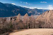 Wiese und Ruine Greifenstein
