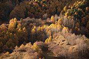 Herbstwald bei Tanas