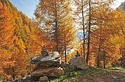 Herbst am Wegesrand
