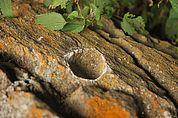 Schalenstein auf der Gampen Kuhalm