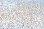 Schnee-Gräser