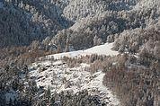 Winterwald bei Burgeis