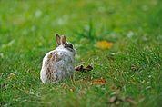 Kaninchen in der Wiese