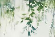 Grüne Spiegelung I