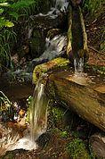 Naturbach mit Brunnen