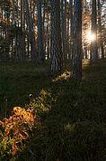 Waldlandschaft am Migleregg