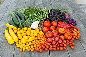 Gartengemüsevielfalt