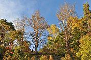 Alte Bäume am Sonnenberg Naturns