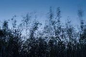 Weidenwind