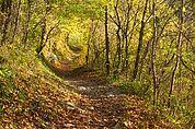 Wanderweg zwischen Plars und Partschins